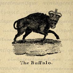 Buffalo with Crown Printable Graphic Image Illustration Digital Download Vintage Clip Art. Printable graphic for making prints, fabric transfers, papercrafts, t-shirts, and other great uses. Real vintage clip art. For personal or commercial use. This digital graphic is high quality and high resolution at size 8½ x 11 inches. A Transparent background png version is included.