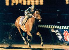 Alysheba returned in 1988 to cap off his Horse of the Year triumph with a dramatic win in the Breeders' Cup Classic, as darkness fell on Churchill Downs.