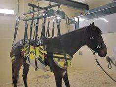 equine body sling - Google Search Horse Care, Horses, Animals, Google Search, Animales, Animaux, Horse Grooming, Animal, Animais