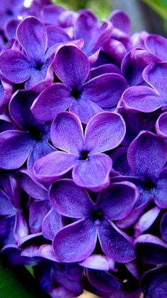 cvety_siniy_trava_siren_4677_360x640.jpg (360×640)
