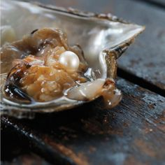 """Pearl in oyster """"All art is autobiographical; the pearl is the oyster's autobiography"""" Federico Fellini"""