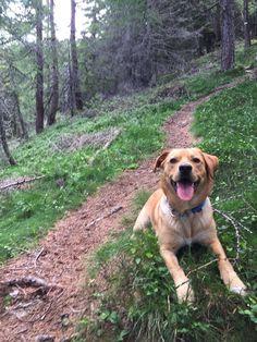 Hunde Foto: Mirko und Nero - Waldspatziergang Hier Dein Bild hochladen: http://ichliebehunde.com/hund-des-tages  #hund #hunde #hundebild #hundebilder #dog #dogs #dogfun  #dogpic #dogpictures