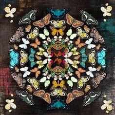 Mandala Pattern with Butterflies art