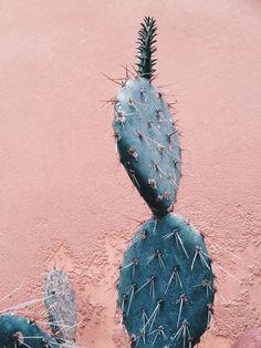 Maskulint // feminint — Kaktus København