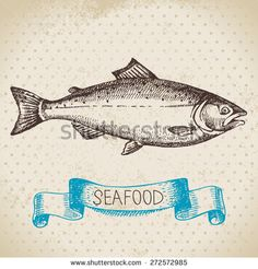 Vintage sea background. Hand drawn sketch seafood vector illustration of salmon fish