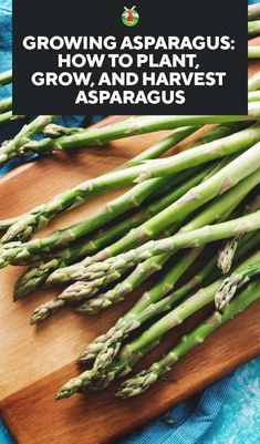 Asparagus is one of those perennial vegetables that people seem to either love or hate. However, for the health conscious: they are incredibly tasty, loaded with vitamins and minerals like vitamins A, C, K, folate, iron, copper, and has lots of fiber. To grow your own, here is our complete guide to growing asparagus.