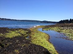 Tide's coming in, Craig's Bay, Vancouver Island