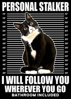 Cat Jokes, Funny Cat Memes, Funny Cats, Art And Illustration, Puppies And Kitties, Dogs, Cat Signs, Animal Antics, Cat Posters