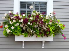 Fabulous Nantucket window boxes www.thedirtdiaries.com