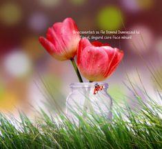 Versete de Aur : 01.11.2013 - 01.12.2013 Spiritual Quotes, Aur, Spirituality, Sabbath, Plants, Spirit Quotes, Spirituality Quotes, Spiritual, Plant