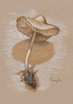 "mushroom drawings pencil | Mushroom Study #2 , pencils and pastel on paper, 7 x 5"", by Tracie ..."