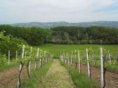 Benevento Campania - Gerry's hometown