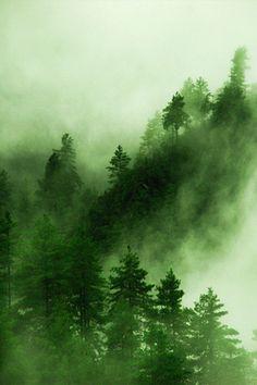 landscape view forest Woods Scenic rainforest vertical