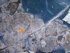 Fossil biota reveals post-extinction seafloor 445 mln years ago