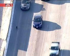 Uma auto-estrada em Los Angeles, quase parou por causa de um cão. Foi em plena hora de ponta que o animal apareceu no meio dos carros. Como se tivessem combinado, os automobilistas abrandaram e formaram uma espécie de barreira para impedir que o cão fosse atropelado. Finalmente, algumas pessoas sairam dos carros e conseguiram apanhar o animal.