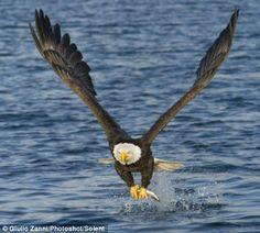 Eagle                                                       …