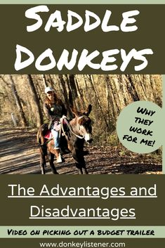 Riding Donkeys Archives - The Donkey Listener Mini Donkey, The Donkey, Horseback Riding Trails, Train Rides, Donkeys, Horse Riding, Livestock, Farm Animals, Equestrian