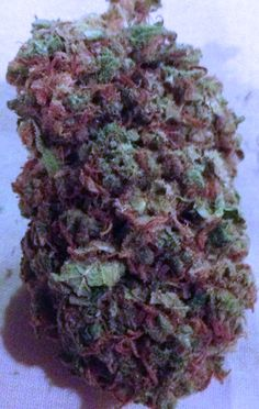 Purple Sour Diesel Cannabis Strain a fast-acting, heavy-hitting hybrid. A cross b/t sativa, Sour Diesel and indica, Purple Kush, Purple Sour Diesel embodies the full force of both strains. Great for nighttime smoking, this strain has a quick onset and a distinctly medicated feel. Featuring heavy head effects and a slight body high, Purple Sour Diesel will energize your mind while leaving you physically relaxed. This strain features a sour, fruity aroma similar to sour grapes. (info from…