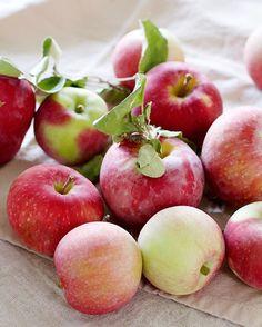 Oie pessoal !! 🙅🏽 hoje passei o dia que nem uma fruit ninja cortando maçã 🍎 de todas as cores e sabores preparando tortas e crisps para trazer o clima de outono 🍂 aqui em casa. Fizemos um passeio em família para um pomar de maçã aqui na região (uma tradição anual) e que nem sempre voltamos para casa com uma sacola ENORME 🙆🏽 dessas frutinhas tão amadas.  Yummery - best recipes. Follow Us! #veganfoodporn