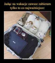 Ready for the trip! - your daily dose of funny cats - cute kittens - pet memes - pets in clothes - kitty breeds - sweet animal pictures - perfect photos for cat moms Funny Animal Memes, Funny Animal Pictures, Cat Memes, Funny Animals, Cute Animals, Memes Humor, Funny Memes, Crazy Cat Lady, Crazy Cats