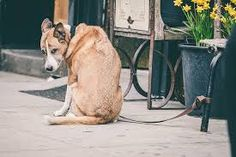 When it comes to feeling the stress and anxiety of dogs that I pass by on the street, one of the biggest contributors might surprise you.  It's pretty common