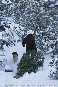 cowboy with a fresh cut Christmas Tree in the woods