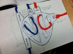 Circulation Game - excellent body systems unit (circulatory and respiratory)