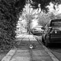 Φωτογραφία στο Instagram από Vasilis Bouharas • 8 Δεκέμβριος 2020 στις 4:37 μ.μ.