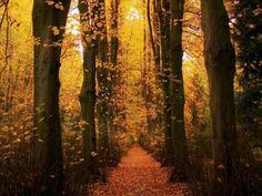 Bosque piola