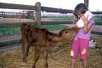 """Old MacDonald's Farm, Rapid City South Dakota.  Guests tell us """"Best Animal Show in the Hills!"""" A beautiful farm that offers pony & train rides for the kids. World-class pig races. Hand feed, pet & even bottle feed some of the animals. Gift shop. Playground. Picnic area."""