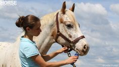 Get your horse looking his best from nose to tail - GROOMING GUIDE