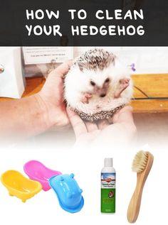 Outstanding cleaning tips hacks are offered on our internet site. Check it out and you wont be sorry you did. Deep Cleaning Tips, House Cleaning Tips, Cleaning Solutions, Spring Cleaning, Cleaning Hacks, Cleaning Supplies, Hedgehog Pet Cage, Hedgehog Facts, Hedgehogs