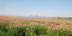 homes AND montana prairie AND plains - Google Search