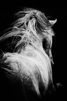( ELI ZABE Insta equestrian style fashion cheval pferde stil lifestyle show equine photography beautiful black and white - art All The Pretty Horses, Beautiful Horses, Animals Beautiful, Horse Photos, Horse Pictures, Equine Photography, Animal Photography, Fashion Photography, Majestic Horse