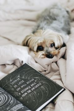 Hygge, Cozy Aesthetic, Animal Books, Pet Life, Book Themes, Book Photography, Yorkshire Terrier, Book Nerd, Bookstagram