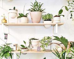 IVY MUSEの植物用壁面造作棚4 観葉植物