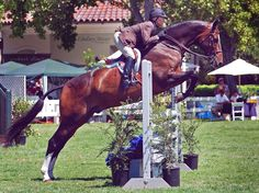 Kaitlyn and Costello, for a pony that is 13.4 hands and used to rear and buck at every jump, he sure can jump and win every time!