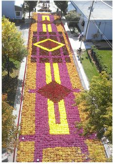 Superbe Fall Flower Carpet Elkhart IN   Part Of The Quilt Garden Trail