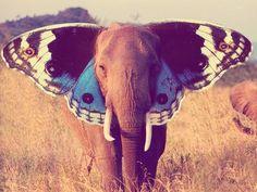Butterfly Elephant.