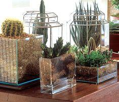 Como Montar um Jardim de (Cactos e Suculentas)   suculentas contidas em vasos são extremamente fáceis de cuidar, pois a drenagem de um vaso...
