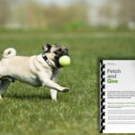 Teach your dog to Fetch and Give with behaviourist and dog trainer Karen Wild