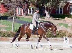 How to ride a perfect stretchy dressage circle