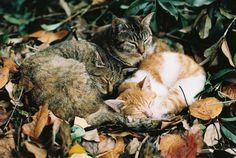 proudtobesquintinside:    catp0rn:    photogenicfelines:    (via warmer dreams with you   Flickr - Photo Sharing!)    bbys    ♥