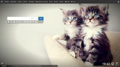 Pictures of maine coon cats, maine coon kittens, maine coon pictures, maine coon cat kittens, the largest cat in the world Wallpaper Gatos, Tier Wallpaper, Kitten Wallpaper, Animal Wallpaper, Trendy Wallpaper, Computer Wallpaper, Mobile Wallpaper, Iphone Wallpaper, Cute Kittens