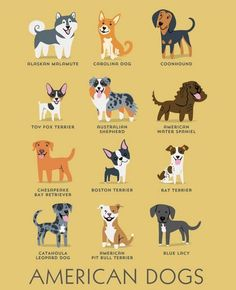 American Dogs
