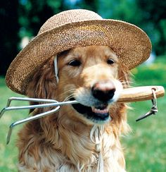 Ready for some gardening!