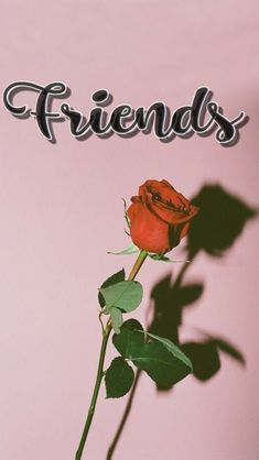 best friends wallpaper Brose