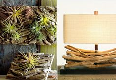 hanging air plants - Google Search