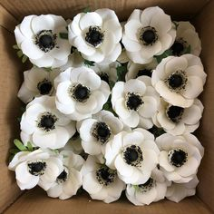 white anemones...