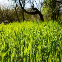 Green! #spring #leica #madeinwetzlar #nature #green #bokeh #leicaq #wandering #macro #france #explore